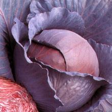 Краснокочанная капуста - польза и вред