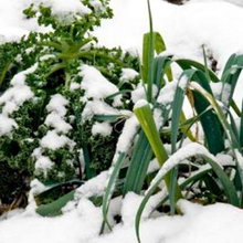 Что можно посеять и посадить под зиму?