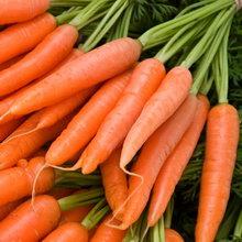 Как вырастить хороший урожай моркови и сохранить его