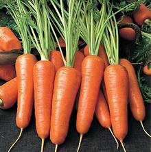 Морковь - польза и вред