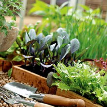 О выращивании рассады для нового урожая