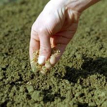 Лекция 7. Технология посевов
