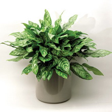 Лекция 34. Домашние растения